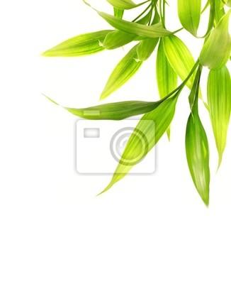 Hojas de bambú aisladas sobre fondo blanco