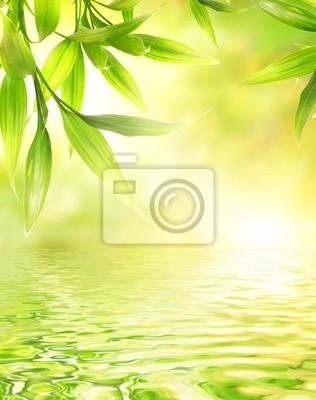 Hojas de bambú se refleja en el agua prestados