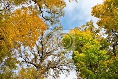 Hojas de colores de otoño