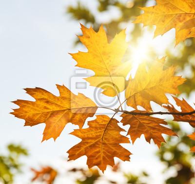 Hojas de otoño con la luz del sol