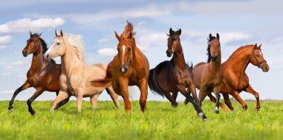 Póster Horse herd run in beautiful green meadow
