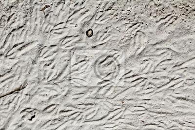 Huellas del pájaro en la arena de fondo / textura