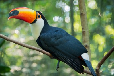 Póster Iguazu Bird Sanctuary