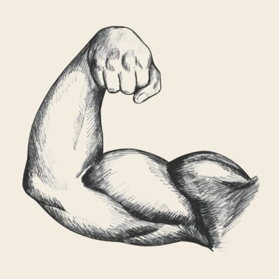 Póster Ilustración Boceto de brazo derecho humano masculino musculoso