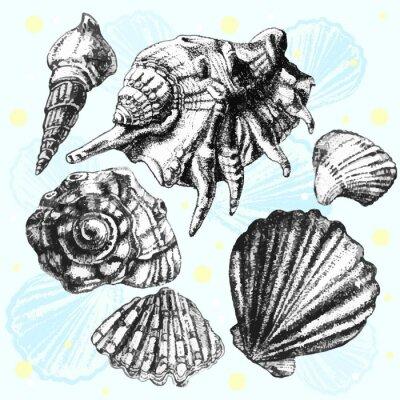 Póster ilustración con diferentes conchas realistas