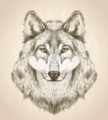 Póster Ilustración de boceto de vector de una vista frontal de cabeza de lobo.
