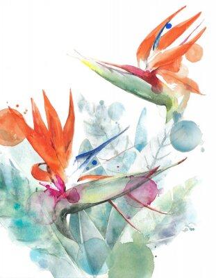 Póster Ilustración tropical de la pintura de la acuarela del strelitzia de la ave del paraíso de las flores aislada en el fondo blanco