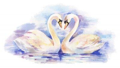 Póster ilustración vectorial de la acuarela de la pareja de cisnes blancos