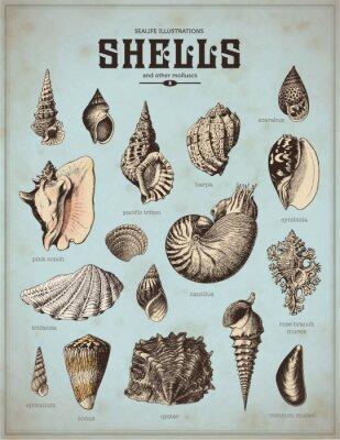 Póster ilustraciones de la vida de mar: conchas (1)