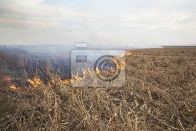 Incendio Incendio en campo de cultivo