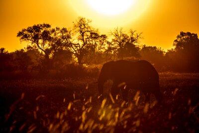 Increíble silueta de elefante en la puesta de sol en el Parque Nacional de Chobe en Botswana, África