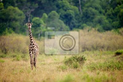 jirafa curiosa