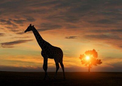 Póster Jirafa durante la puesta de sol africana