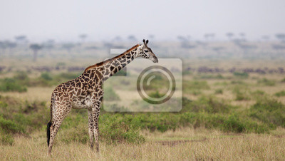 Jirafa en Kenia