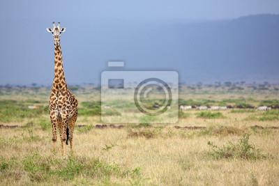 Jirafa salvaje en el Masai Mara