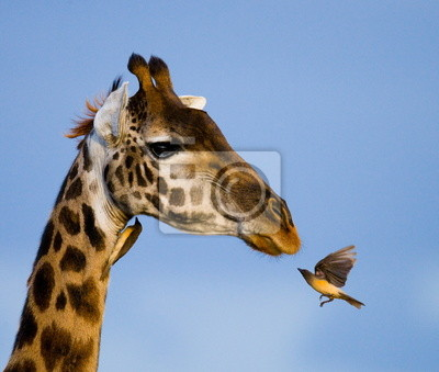Jirafa y okspeker