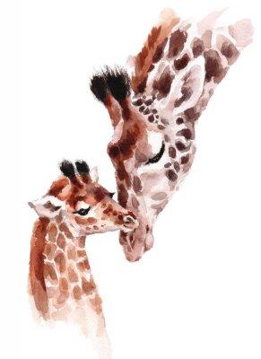 Póster Jirafas madre y bebé acuarela pintada a mano ilustración de animales salvajes aislado sobre fondo blanco.