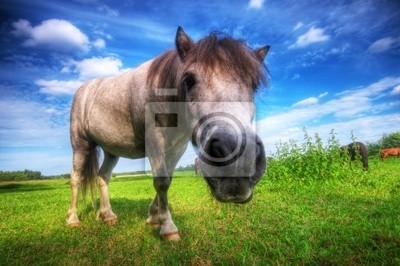 Joven caballo salvaje en el campo