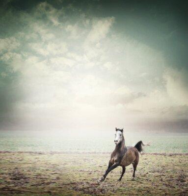 Póster Jóvenes caballo corriendo en el fondo de pastos y cielo, tonos