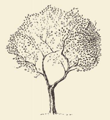 Póster Jóvenes de olivo ilustración vectorial dibujado a mano