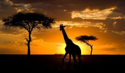 Póster Kenia.