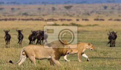 Kenia. Tanzania. Una excelente ilustración.