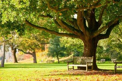 Póster Kew Gardens parque