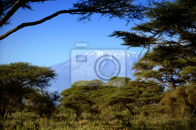 Kilimanjaro en Amboseli