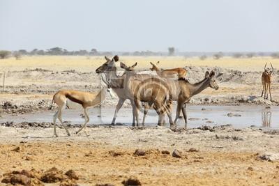 Kudu y de Springbok en el pozo de agua
