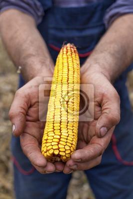 La celebración de la mazorca de maíz