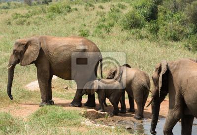 La familia de los elefantes cerca del agujero de agua en Kenia
