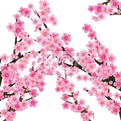 La Flor De Cerezo Flores De Sakura Ilustración Vectorial Carteles