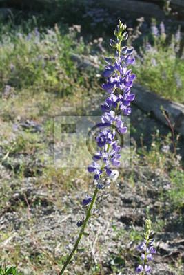 La flor en el John Muir rastro.