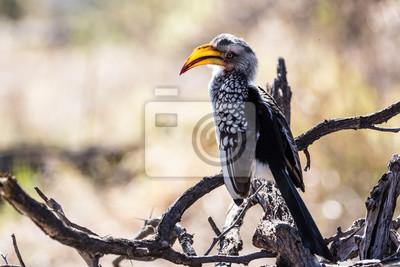 La increíble vida silvestre en el Parque Nacional de Chobe Botswana
