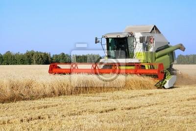 La limpieza de un campo de trigo por una cosechadora