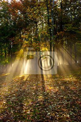 La luz del sol y las sombras del bosque