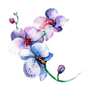 Póster La nueva vista de orquídea acuarela dibujado a mano para la postal aislada sobre el fondo blanco
