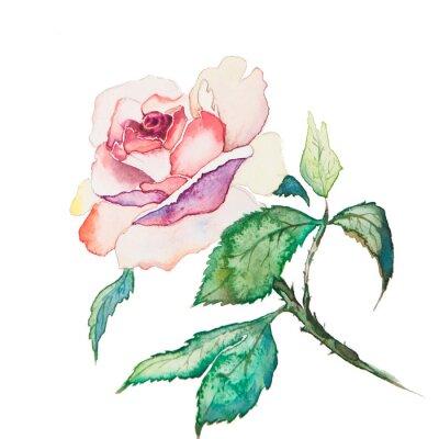 Póster las acuarelas flores de primavera aislados en el fondo blanco