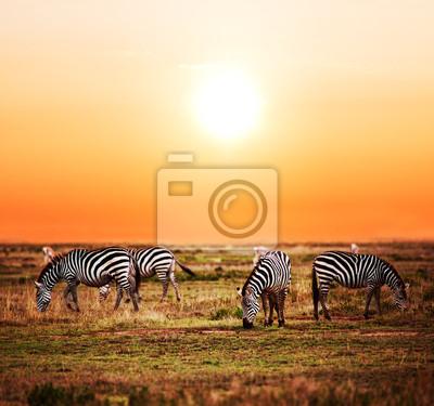 Las cebras ganado en la sabana africana al atardecer. Safari en el Serengeti