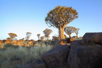 Las rocas y los árboles de la aljaba en el bosque del árbol de la aljaba