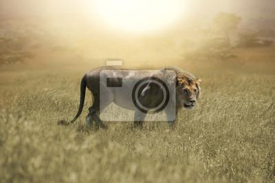 León grande en la sabana africana en Serengeti