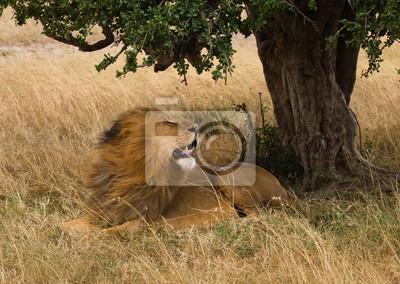 León grande en la sabana tempestuosa africana en Kenia