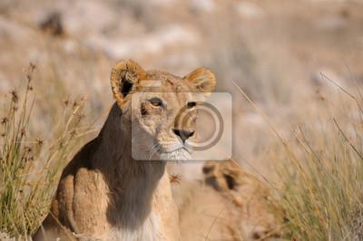 León Staring