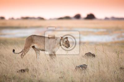 Leona en bushveld