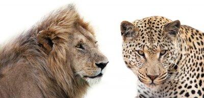 Póster Leone e Leopardo insieme