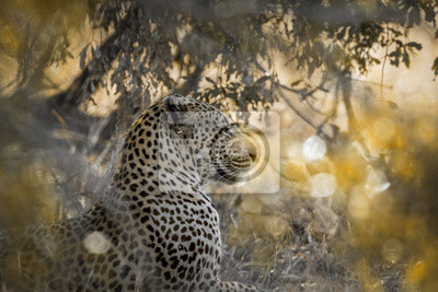 Leopardo en el parque nacional de Yala, Sri Lanka