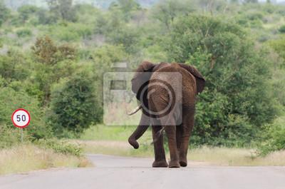Límite de velocidad del elefante