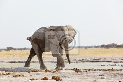 Lone Bull del elefante en la charca