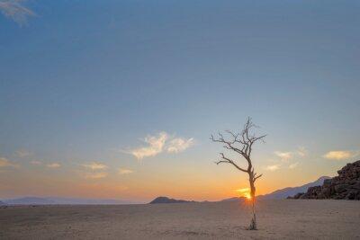 Lone dead tree at sunrise in the Namib Desert