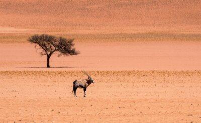 Lone oryx in dry Namib Desert